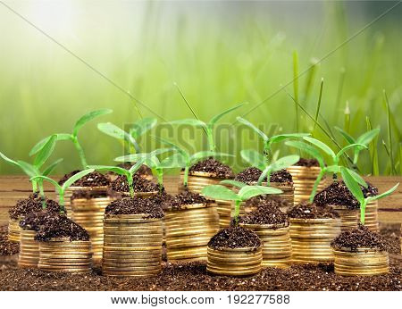 Plant sprouts in soil on stacks of gold coins against a green background with copy space. Financial growth concept.