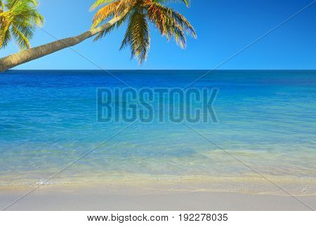 Beautiful Caribbean sea and green palm trees. Summer sea landscape as a background.