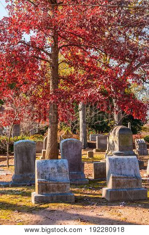 Group of tombstones under the crown of the red oak on the Oakland Cemetery in sunny autumn day Atlanta USA