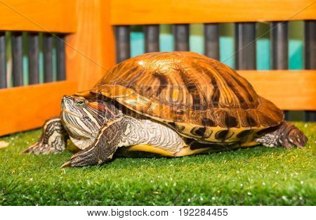 The Little Turtle With Green Eyes In The Petting Zoo