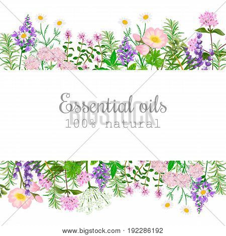 Popular essential oil plants label set. badge with text. Peppermint lavender sage melissa Rose Geranium Chamomile oregano etc For cosmetics spa health care aromatherapy advertising tag