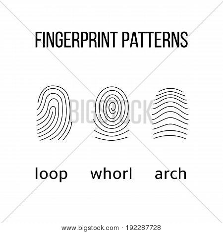 Three fingerprint types on white background. Loop whorl arch patterns. Vector illustration.