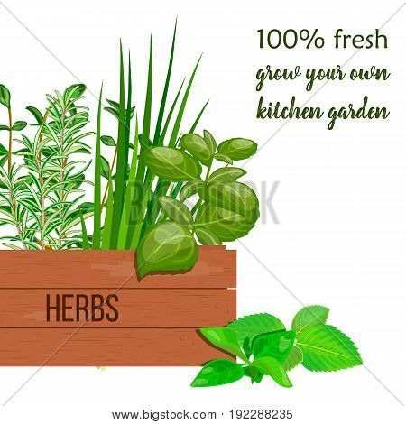 Wooden crate of farm fresh cooking herbs in wooden box with place for text . Greenery basil rosemary chives thyme oregano with text. Horticulture. houseplants. Gardening. For advertising poster