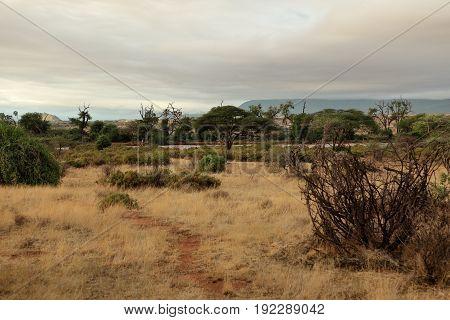 The savannah in the north of Kenya