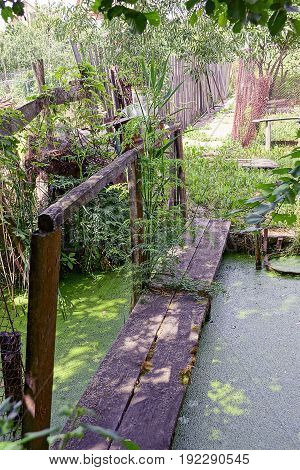 Wooden bridge over a pond with green duckweed