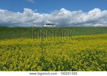 White car on the edge of blossoming yellow rapeseed field against the sky and clouds