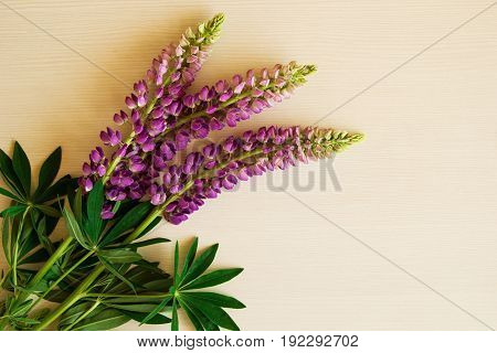 Purple Flowers Of Lythrum On The White Wooden Background.