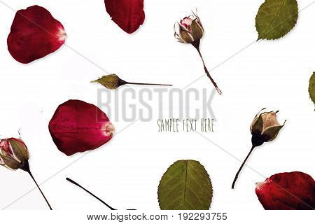 Pressed and dried rose petal bud flowers isolated on white background. For use in scrapbooking floristry or herbarium.