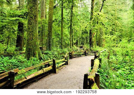 Trail through old growth forest at Cathedral Grove Vancouver Island BC Canada