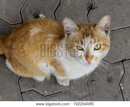 Slightly dirty orange and white street cat with beautiful eyes.