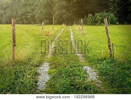 Beaten track or worn path through meadow toward foliage trees with poles around, center composition, moving towards objective, lush fresh and warm, natural landscape of central Europe