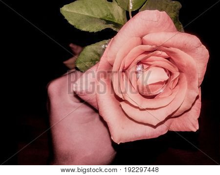 girl hand holding rose flower with wedding ring