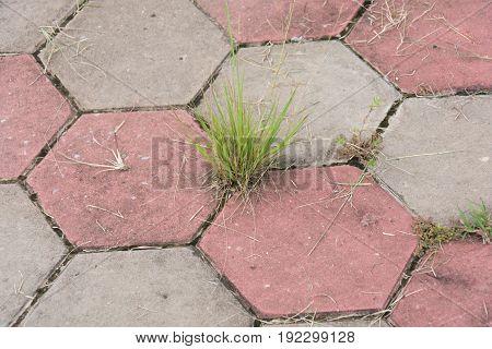 grass jam footpath hexagon concrete block,Grunge Brick Stone on The Ground