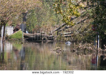 Downed Tree - Katrina