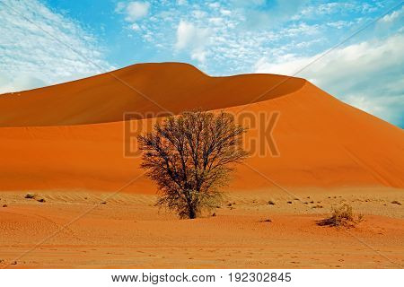 Windswept Sand Dune with a blue wispy cloud sky and an isolated bush in the foreground
