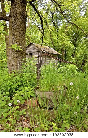 An old forgotten hand pump and outhouse are surrounded by foliage