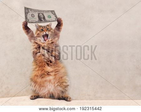 The Big Shaggy Cat Is Very Funny Standing.shelter 13