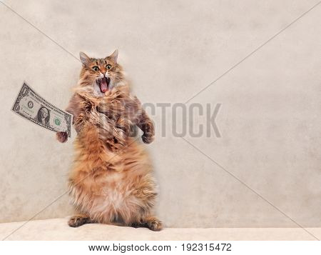 The Big Shaggy Cat Is Very Funny Standing.shelter 3