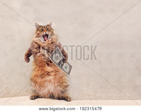 The Big Shaggy Cat Is Very Funny Standing.shelter 5