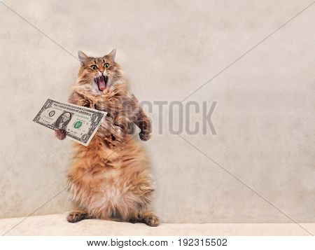 The Big Shaggy Cat Is Very Funny Standing.shelter 8