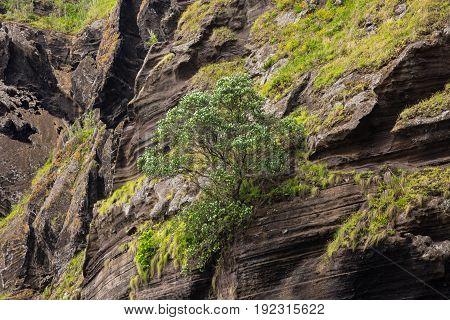 Rock Wall Above The Porto Capelas Fishing Port On Sao Miguel Island