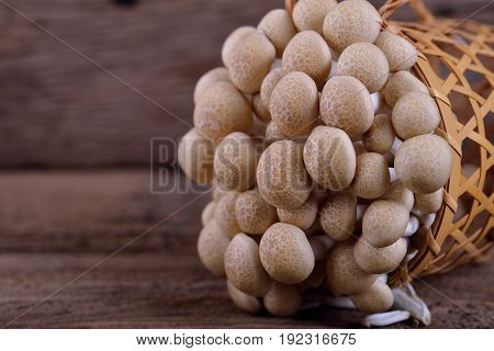 fresh buna-shimeji (brown beech) mushroom in basket and on wooden table