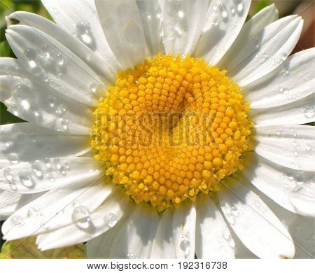 Beautiful flower with water drops in the morning.