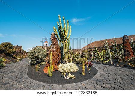 Windmill In Tropical Cactus Garden In Guatiza Village, Popular Attraction In Lanzarote, Canary Islan
