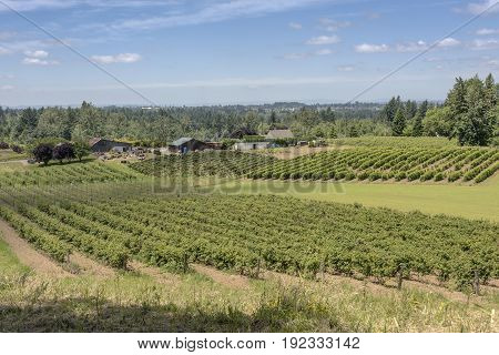Raspberry farms and fields in rural Oregon.