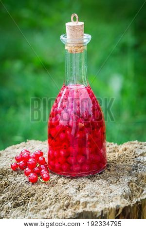 Homemade Liqueur Made Of Redcurrants And Alcohol In Summer