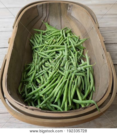 Wood harvest basket trug with green French beans