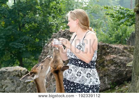 Woman Who Feed And Pat The Fawns At The Zoo