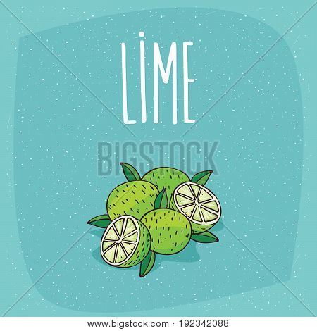 Isolated Ripe Lime Fruits Whole And Cut