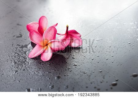 Group Pink Frangipani Wet Black Background Dropp