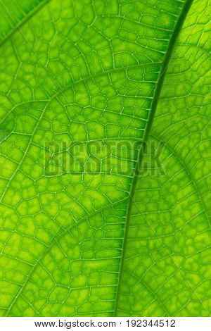Green leaf a close-up photograph background flora and fauna