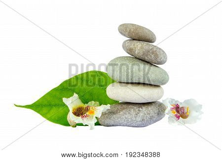 Sea Stones With Leaf Isolated On White Background