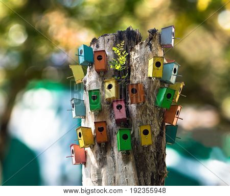 Multicavity bird house. Multicolored birdhouses nailed to the old tree.