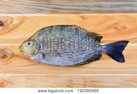 Fresh  Trevally Fish For Cooking