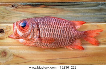 Fresh Pinecone Soldierfish For Cooking