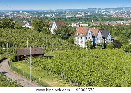 An image of some vineyard at Stuttgart city