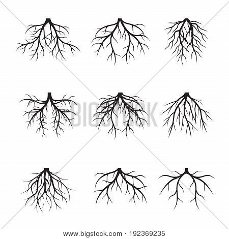 Set Black Tree Roots. Vector Illustration and graphic element.