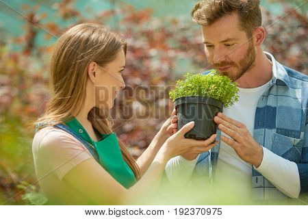 Horizontal indoors shot of woman giving pot with plant to smell for man standing in hothouse together.