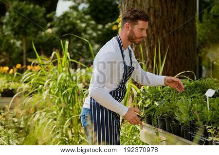 Handsome young man doing horticulture job and taking care of fresh green plants in the garden.