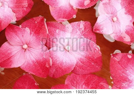 Clean water and hortensia flowers, close up