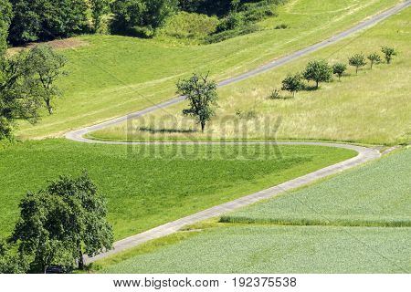 An image of a winding path in the green