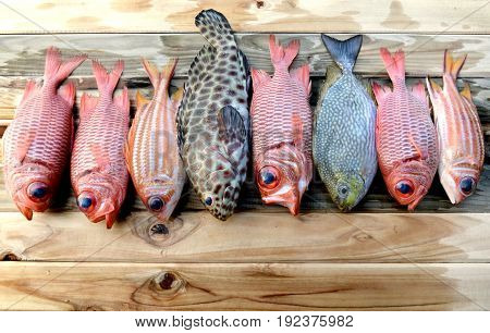 Mix Fresh Pinecone Soldier Fish And Grouper Fish For Cooking