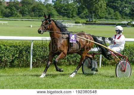WROCLAW, POLAND - JUNE 18: Vocean horse on the race for 8-year-old and older trotting French on June 18, 2017 in Wroclaw, Poland. This is an annual race on the Partynice track open to the public.