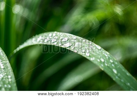 green grass with dew and rain drops