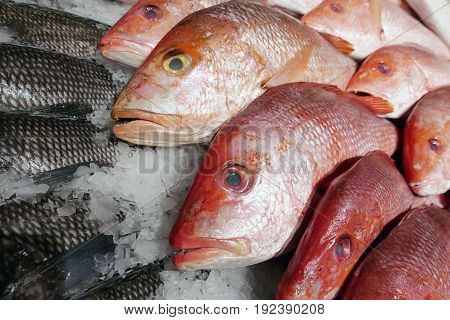 Fresh Fish on Ice for Sale at Fish Market