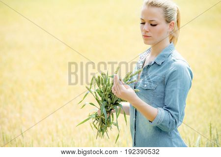 agronomist examining barley crop ears woman farm worker controls plant development